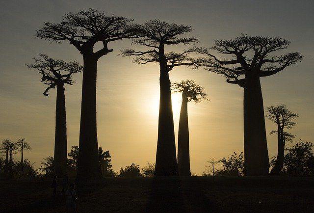 Grupo Madagascar–Noviembre 2021